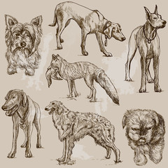 DOGS (Canidae) around the World (set no.2)