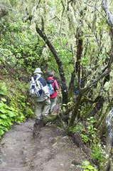 Wandergruppe im Nationalpark Garajonay auf Gomera