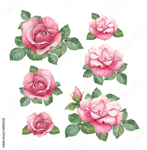 Watercolor illustrations of rose flowers