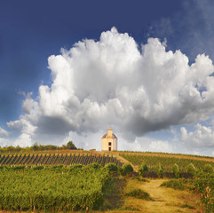 Vineyard and hills, Tokaj - Unesco World Heritage Site, Hungary
