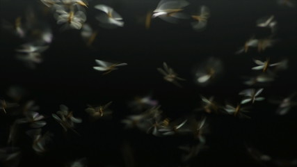 moth flying in the neon light