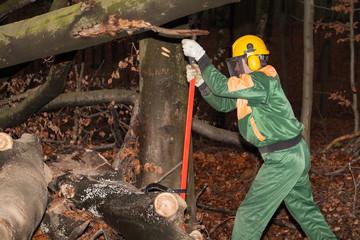 Holzfäller bei der Arbeit im Wald