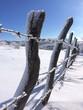 filo spinato nella neve