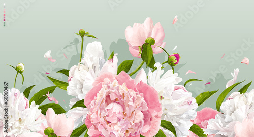 Fototapeta Pink and white peony background