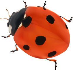 illustration with red seven ponts ladybug on white