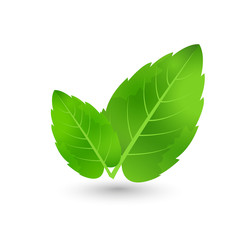 ecology concept icon with glossy green leaves