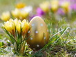 canvas print picture - crocus with easter eggs on meadow