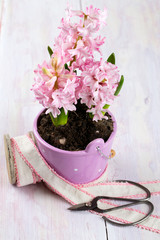 hyacinth flower in a violet bucket on wooden surface