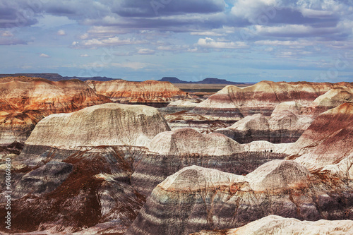 canvas print picture Petrified forest