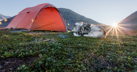 Sunrise with tent and Dog in Sweden
