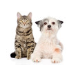 cat and dog looking at camera together. isolated on white