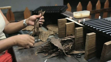 Cigar Production Handmade