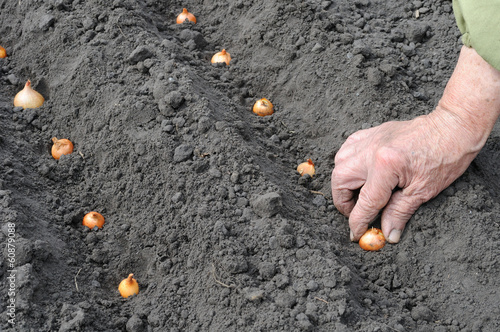 Senior woman planting onion