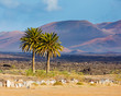Landscape mountain in Lanzarote