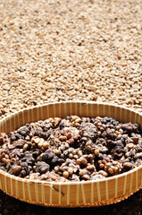raw kopi luwak in the bowl