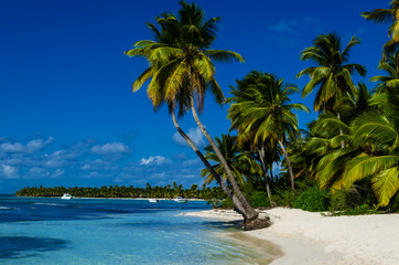 Caribbean beach with palms
