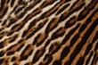 particolare di pelliccia di ocelot