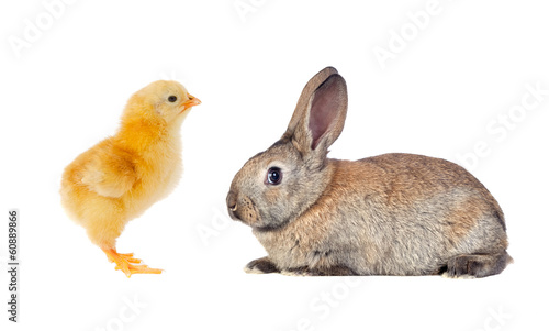 Yellow chicken and brown rabbit
