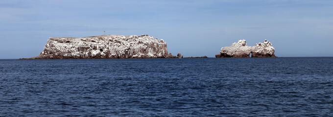 Sea lions rock