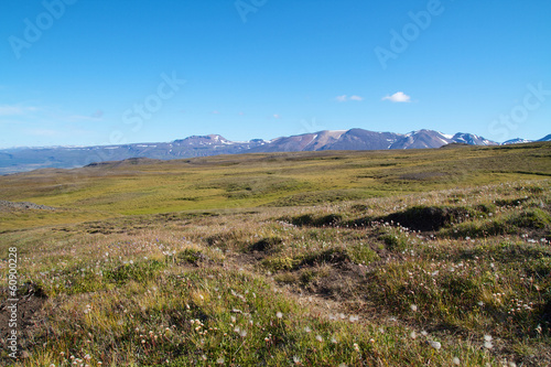 meadow in mountain landscape on iceland