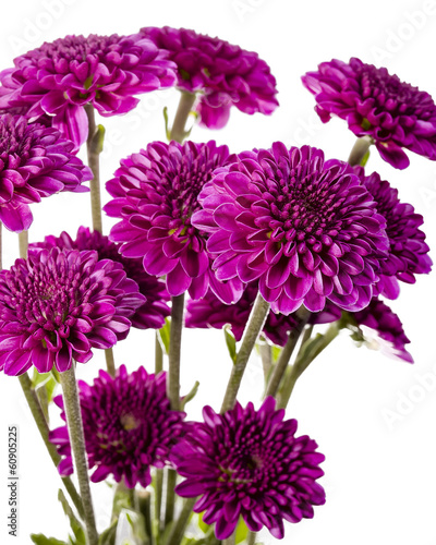 Bouquet of Purple Chrysanthemums