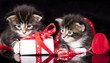 tvo little kittens and gift