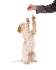 Hund macht Männchen