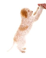 Hund berührt mit Pfoten Handfläche