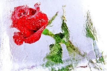 Rose im Eis eingefroren