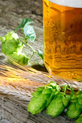 Hop Cones And Barley