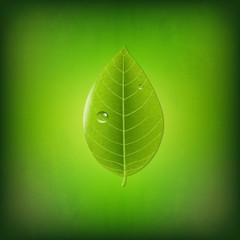 Grunge Green Background With Green Leaf