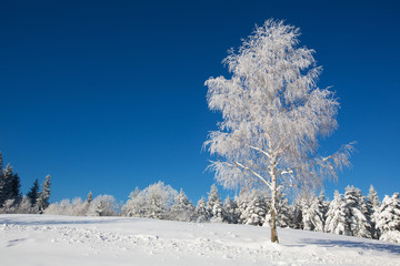 Idyllic winter scene with isolated birch tree and fresh snow