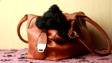 Scottish Terrier puppy in Handbags
