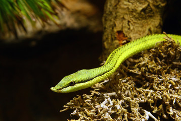 Small green snake