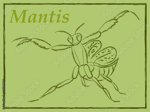 vector illustration of mantis