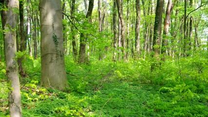 Wald vid 02