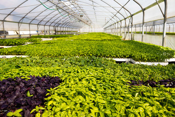 Greenhouse farm