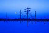 Blue winter scene with full moon and trees