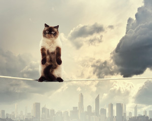 Siamese cat sitting on rope