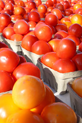 Fresh Tomatoes for Sale at Famer's Market