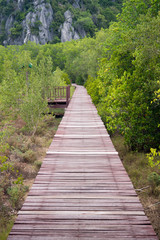 Wooden bridge through the mangrove reforestation