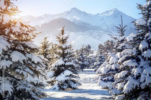 Tuinposter Overige Winter mountain scenery