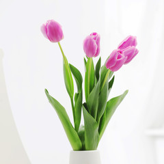 tulips in room