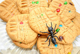 Sweet Cookies with a Plastic Ant on Top