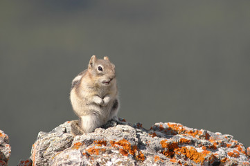 Chipmunk on the rock