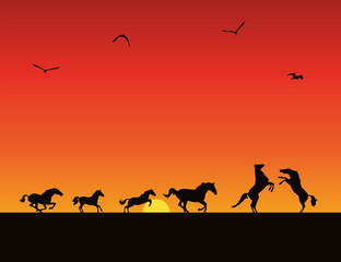Vector silhouettes of horses, sunset