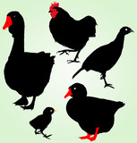 Collection of silhouettes of ferme birds