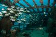 shipwreck, caribbean sea - 60953282