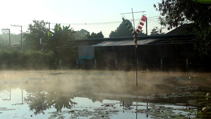 Fog on the water.Fog on the surface of the lotus pond