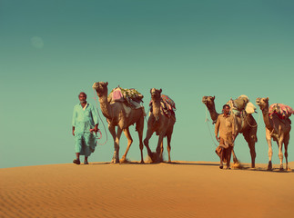 cameleers with camels in desert  - vintage retro style